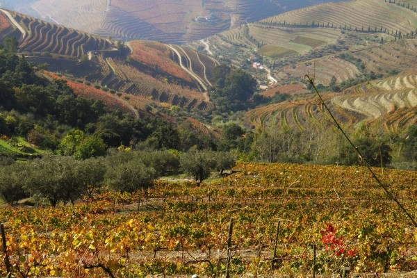 Douro Region‡ by Essencia da Latitude
